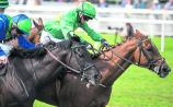 THE PUNTER'S EYE: Four horses worth backing this weekend