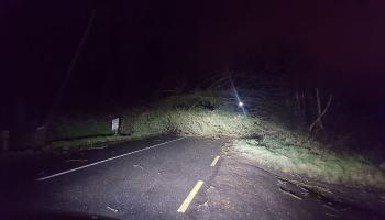Trees down on roads in North Louth this morning