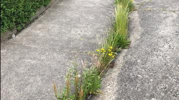 Lack of maintenance resulting in Dundalk streets being eyesores, say Cllr Sean Kelly