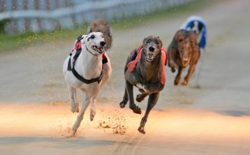 Colm Farrelly's home-bred, Painted Paws, best in an all-local finish at Dundalk Stadium
