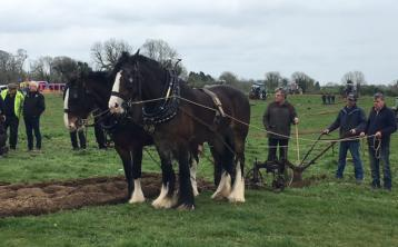 Louth man is 'King' again at 2017 National Ploughing Championships