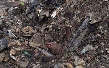 Louth Cllr 'physically sick' following grim discovery