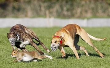 INSIDE TRACK   Coursing gets a good airing on the telly, but why was Joe Carroll not in Clonmel?