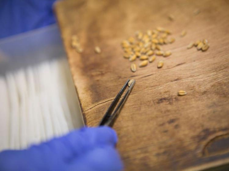 The Mystery Over Seeds Sent From China Solved