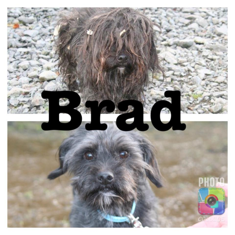 Dundalk Dog Rescue unable to save more pound dogs like Brad